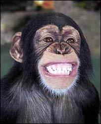 monkey_smiling